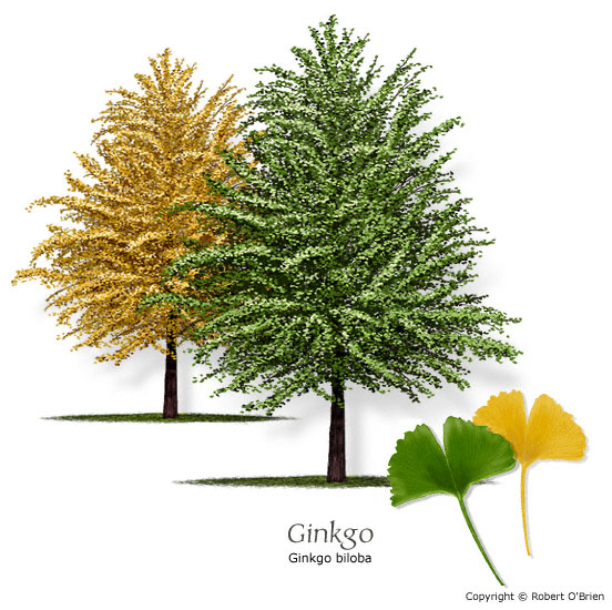 Discount Trees Of Brenham Ginkgo