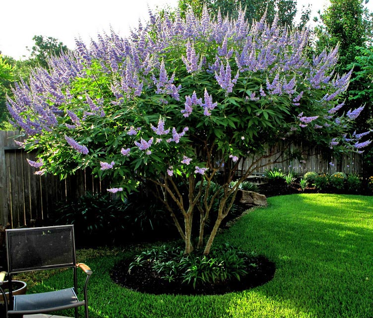 Small Ornamental Grasses With Purple Flowers Discount Trees of Bren...